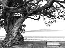 Bench under Lone Old tree  Stock Image