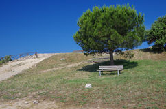 Bench under pine tree Stock Photography