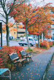 Bench under red leaves tree in autumn, vintage color. Selective focus Royalty Free Stock Image