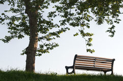 Free Bench Under Rhe Tree Royalty Free Stock Images - 19432489