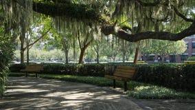Bench under large Live Oak tree stock photography