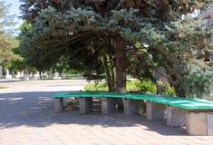 Bench under spruce Stock Image