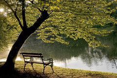 Bench Under The Tree Royalty Free Stock Photos