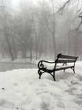Bench under tree. Lonely bench under the tree Royalty Free Stock Photo
