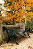 Bench Under The Tree Royalty Free Stock Photo