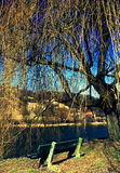 Bench under tree. Near river Orava in city Dolny Kubin, Slovakia royalty free stock photos