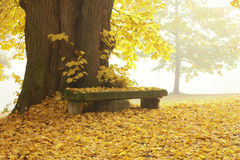 Bench and tree Royalty Free Stock Photography