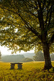 Bench under tree in autumn on golf course Stock Image
