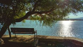 Bench Under Tree during Day Beside Body of Water Stock Photography