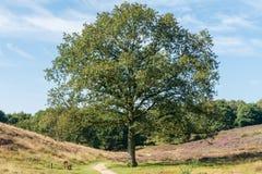 Bench under tree in dutch heathland Stock Image