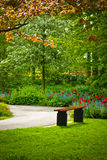 Bench under a tree with flowers in a park Royalty Free Stock Image