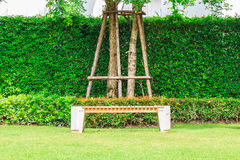 A Bench under a tree in a garden. Stock Photography