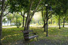 A bench under a tree and Lighting in the garden Park in Bangkok.  Royalty Free Stock Images