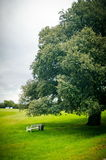 Bench under tree Royalty Free Stock Images