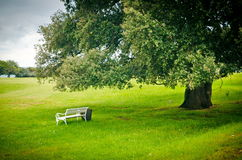 Bench under tree Royalty Free Stock Photography