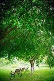 Bench under tree Royalty Free Stock Photo