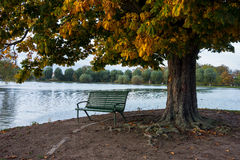 Bench under tree near lake. Bench under the tree in autumn weather Stock Image