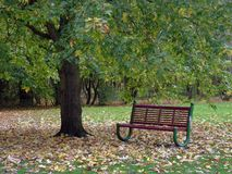Bench under tree stock image