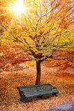 Bench under a tree in a park royalty free stock images