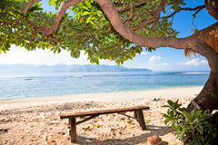 Bench under tree on sunny beach Stock Photos