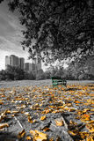 Bench under the tree. In the Vachirabenjatas Park Rot Fai Park, Bangkok, Thailand Stock Photos