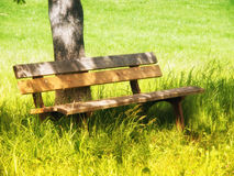 Bench under a tree (10) Royalty Free Stock Images