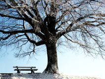 Bench under the tree (2) Royalty Free Stock Photography