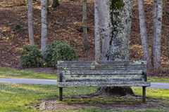 Bench under a tree Stock Photography
