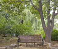 Bench under a tree. A wooden bench under a big tree Stock Photo