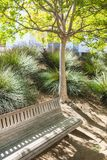 Bench under the young tree is in a sunny green Royalty Free Stock Photography