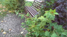 Bench in urban Park in autumn slow HD. Bench in urban Park in autumn slow stock footage
