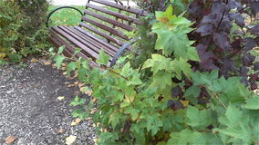 Bench in urban Park in autumn slow HD. Bench in urban Park in autumn slow stock video
