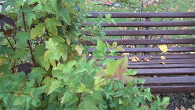Bench in urban Park in autumn slow HD. Bench in urban Park in autumn slow stock video footage