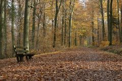 Bench and walk in autumnal wood, Baden Royalty Free Stock Photos