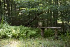Bench and ferns beside trail stock image