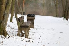 Bench in winter big natural park Stock Image