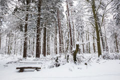 Bench in winter forest Royalty Free Stock Photo
