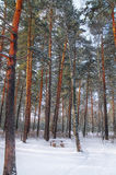 Bench in winter forest. Bench in a forest covered with snow Royalty Free Stock Images