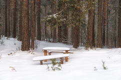 Bench in winter forest. Bench in a forest covered with snow Royalty Free Stock Image