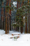 Bench in winter forest. Bench in a forest covered with snow Royalty Free Stock Photos
