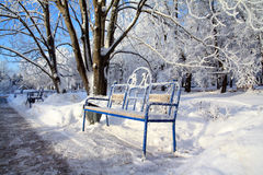 Bench in winter park stock photography