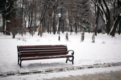 Bench in winter park with a lantern Stock Images