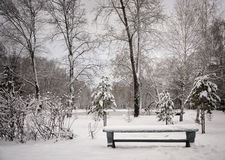 The bench in winter park. Winter parkwinter day, snowy park, lots of trees, lake, bench, snow, frost Stock Photography