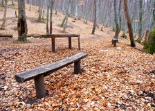 Bench in wood Stock Photography
