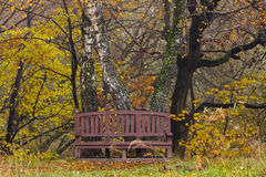 Bench in the wood Stock Image
