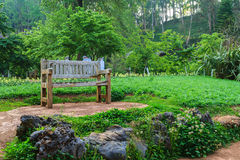 Bench wood in the garden. The royal agricultural Angkhangstation Royalty Free Stock Images