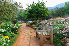 Bench wood in the garden. Bench wood in the garden, the royal agricultural Angkhangstation in chiangmai, North of Thailand Stock Photo