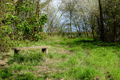 Bench by a woodland path. Royalty Free Stock Images