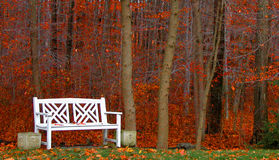 Bench in the Woods. Autumn scene with red fallen leaves, bare branches and a white bench royalty free stock photos