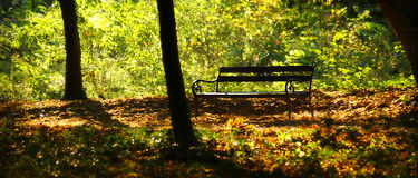 Bench in the woods. Empty bench for rest in the woods Royalty Free Stock Photo
